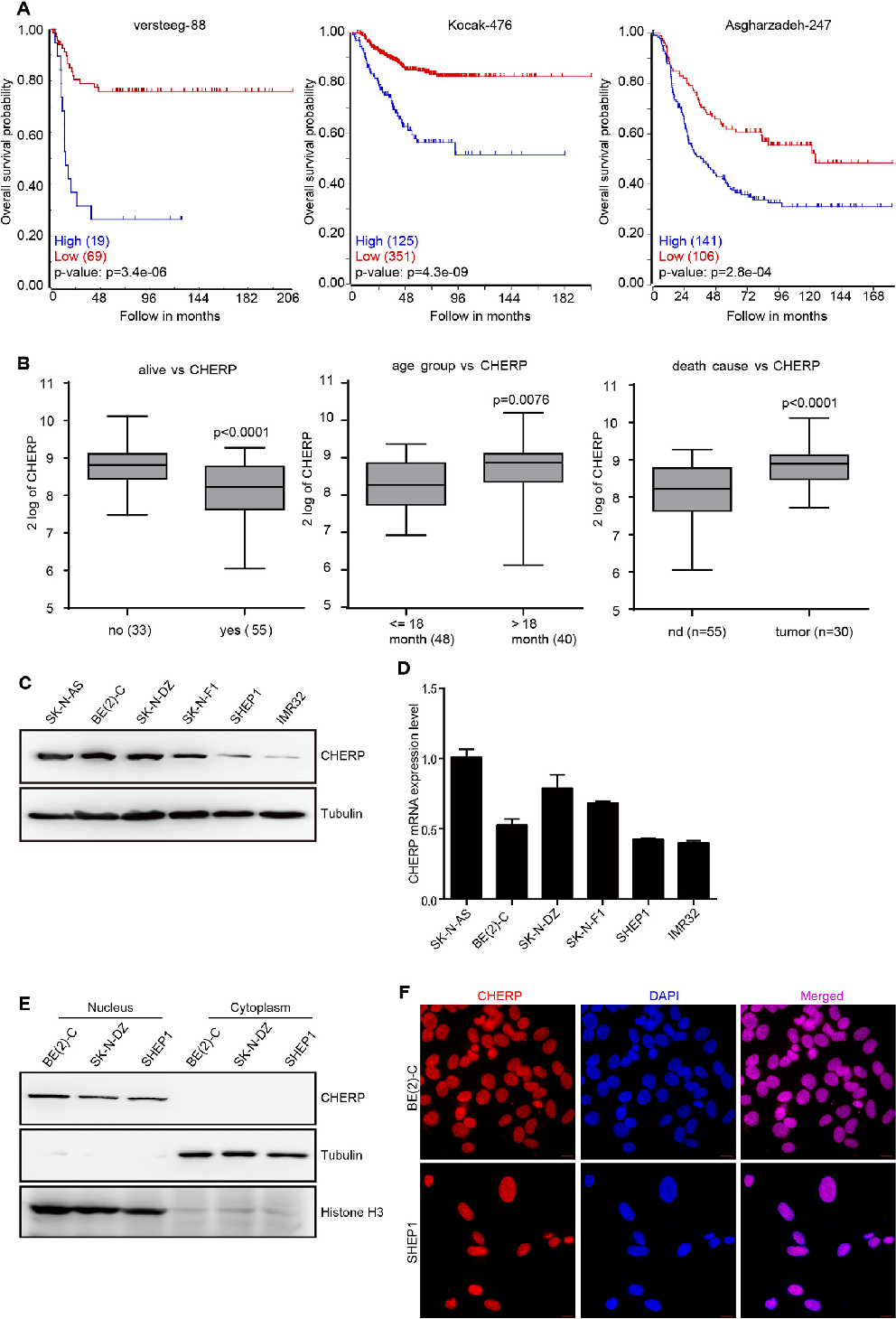 Down regulation of cherp inhibits neuroblastoma cell proliferation figure 1 ccuart Images