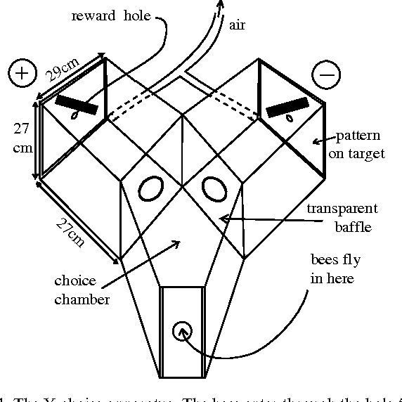 Figure 9 From Discrimination Of Single Bars By The Honeybee Apis