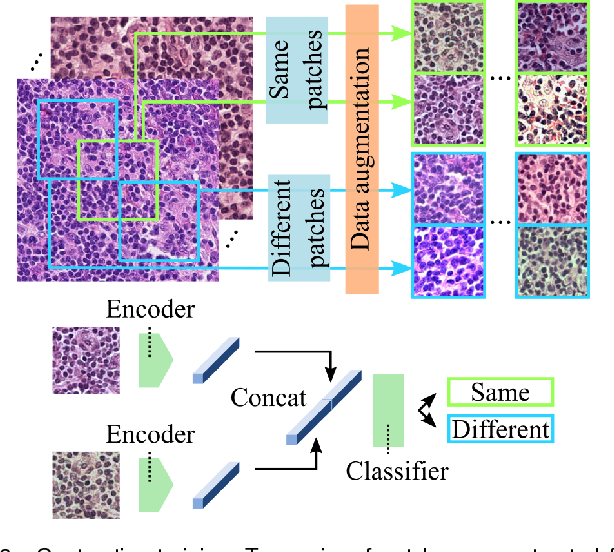 Figure 4 for Neural Image Compression for Gigapixel Histopathology Image Analysis