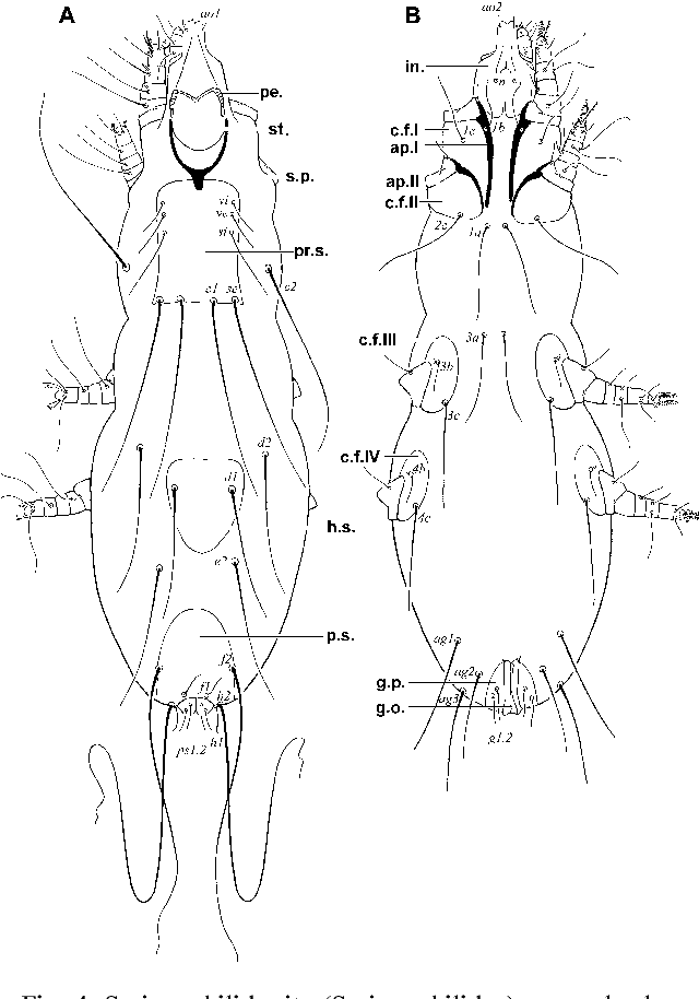 Figure 4 From Phylogeny Of Quill Mites Of The Family Syringophilidae
