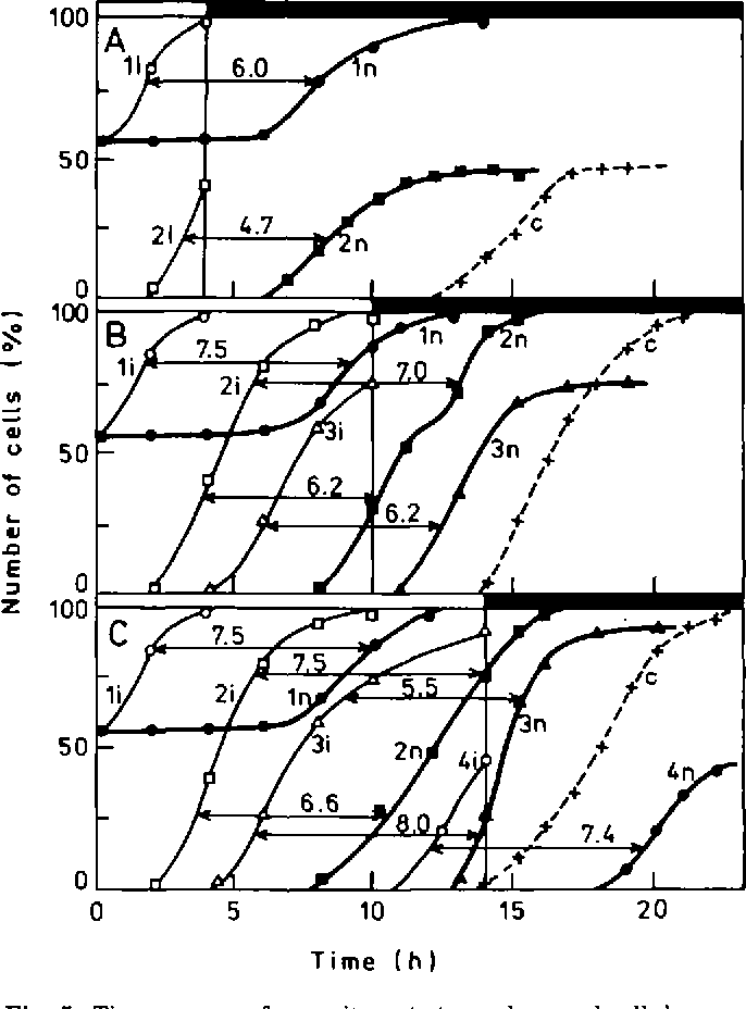 Timing Of Events In Overlapping Cell Reproductive Sequences And