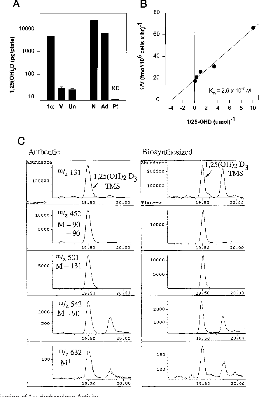 Cloning Of Human 25 Hydroxyvitamin D 1 Alpha Hydroxylase And