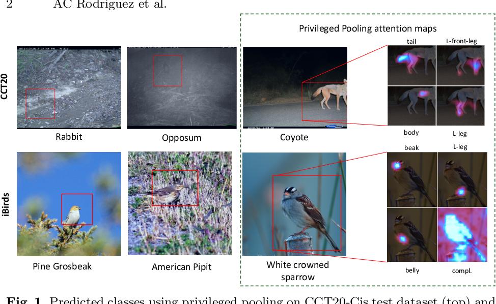 Figure 1 for Privileged Pooling: Supervised attention-based pooling for compensating dataset bias