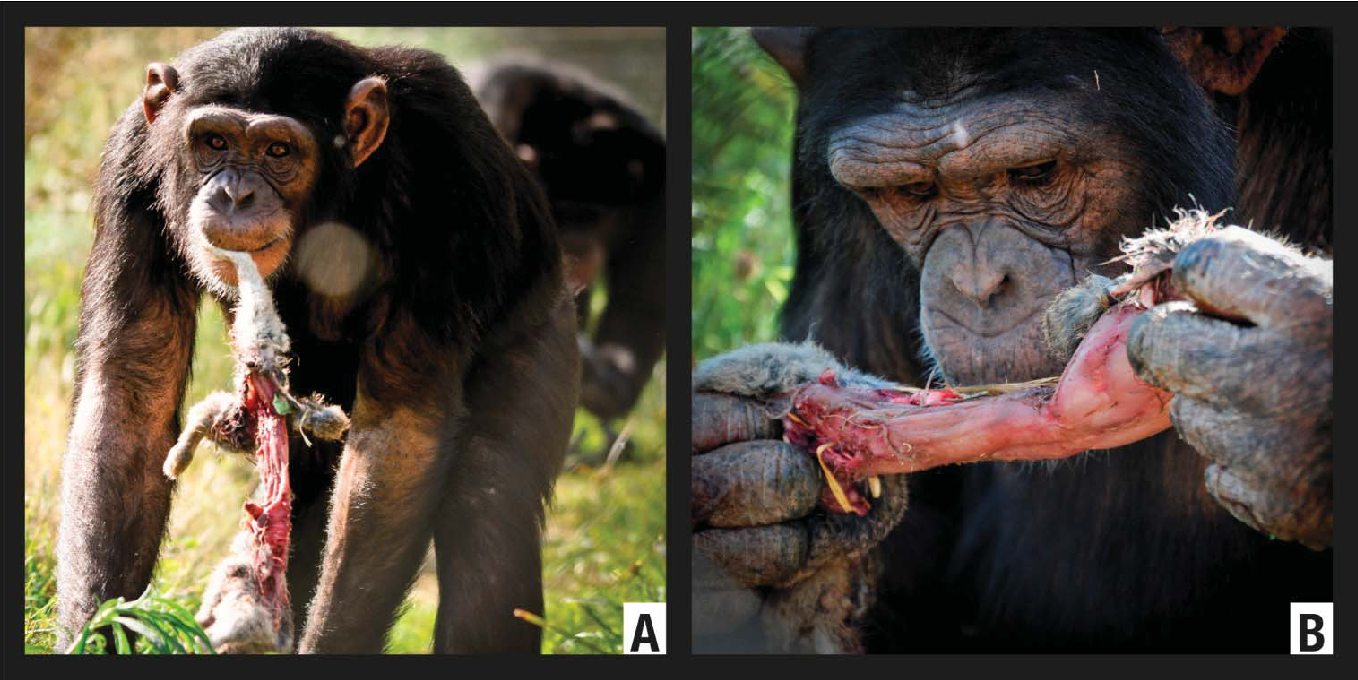 Figure 7 from Hunting Activity Among Naturalistically Housed