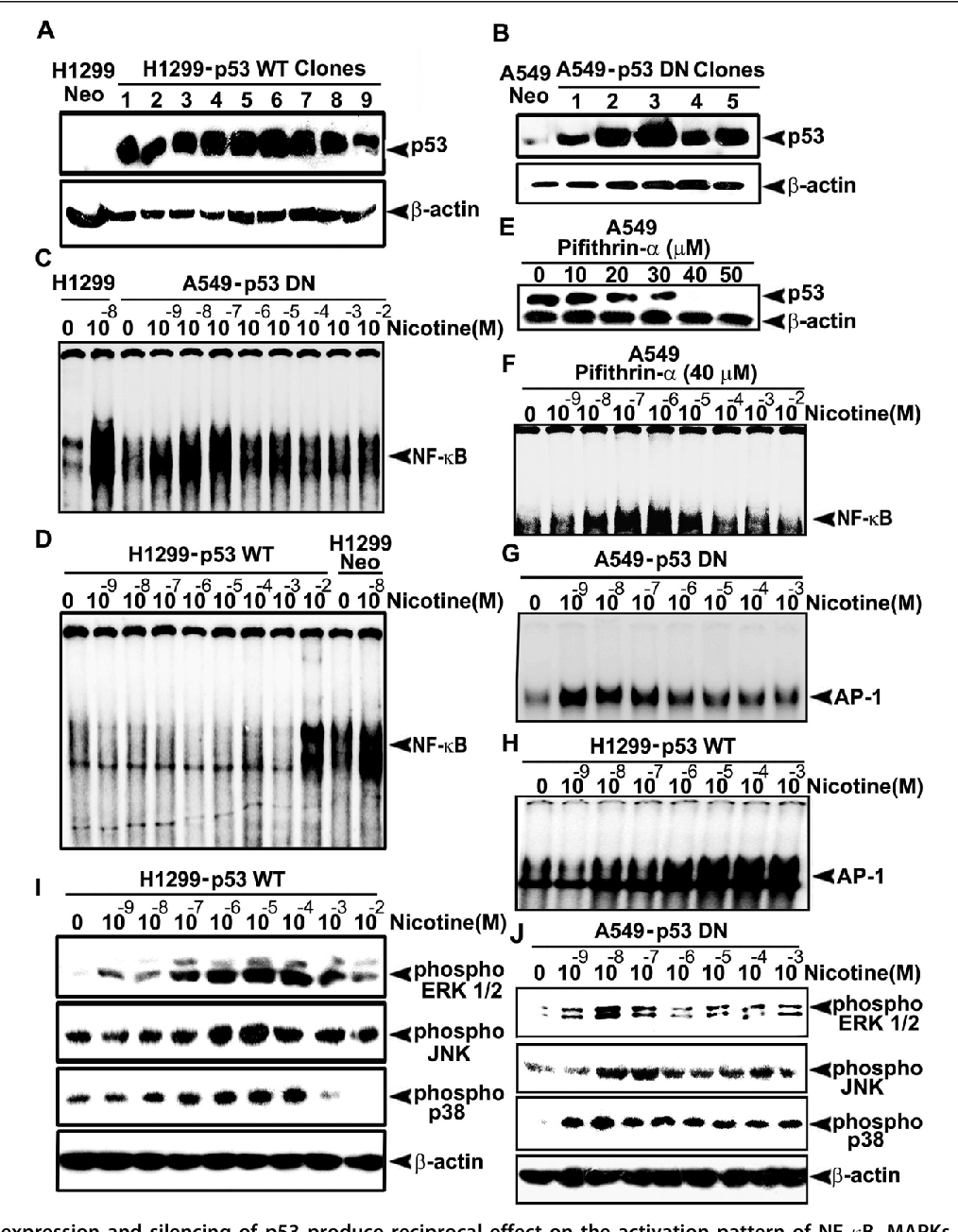 Figure 6 Over-expression and silencing of p53 produce reciprocal effect on the activation pattern of NF- B, MAPKs and AP-1. (A-B) H1299 and A549 cells were transfected with pcDNA3-p53 WT and pcDNA3-p53 DN constructs respectively and the stable clones selected were lysed and Western blotted against p53 antibody. (C-D) H1299-p53 WT and A549-p53 DN cells were treated with nicotine (10-9-10-2M) for 30 min, and EMSA was done using nuclear extracts. (E) A549 cells were treated with different concentrations of pifithrin-a (10-50 μM) for 4 h and the whole cell lyasates prepared were Western blotted against p53 antibody. (F) A549 cells were treated with 40 μM pifithrin-a for 4 h followed by nicotine (10-9-10-2M) for 30 min and EMSA was done. (G-H) H1299-p53 WT and A549-p53 DN cells were treated with nicotine (10-9-10-2M) for 30 min, and EMSA was done. (I-J) H1299 WT-p53 and A549 DN-p53 cells were treated with nicotine (10-9-10-2M) for 30 min and whole cell lysates were Western blotted against respective phospho specific antibodies. All blots and EMSAs are representative samples of three independent experiments.